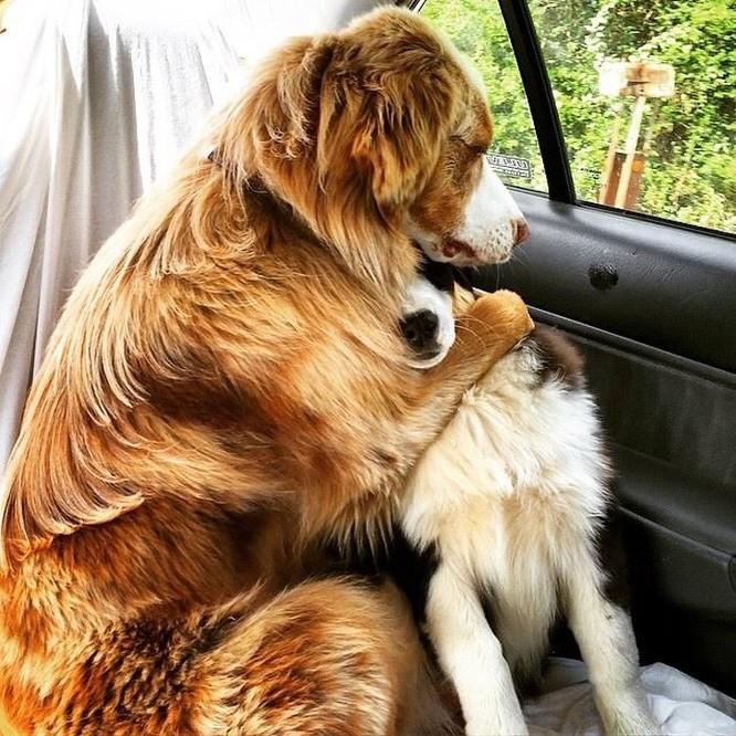 12 sự thật về loài chó có thể bạn chưa biết ảnh 12