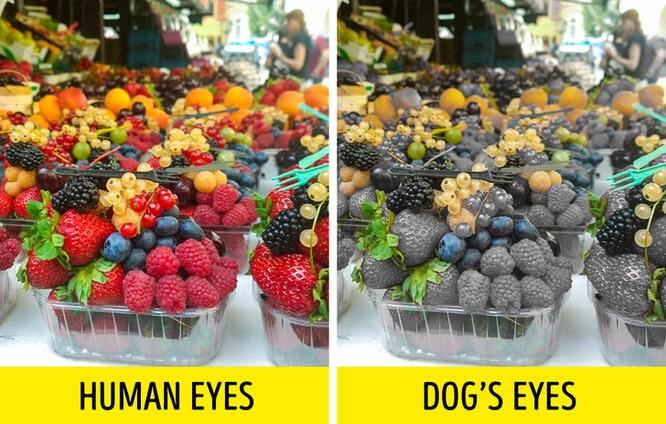 12 sự thật về loài chó có thể bạn chưa biết ảnh 5