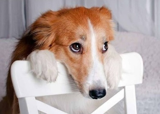 12 sự thật về loài chó có thể bạn chưa biết ảnh 9