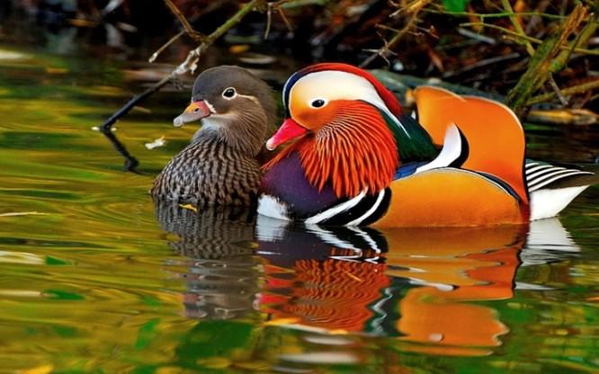 10 loài chim giống người ngoài hành tinh hơn động vật ảnh 10