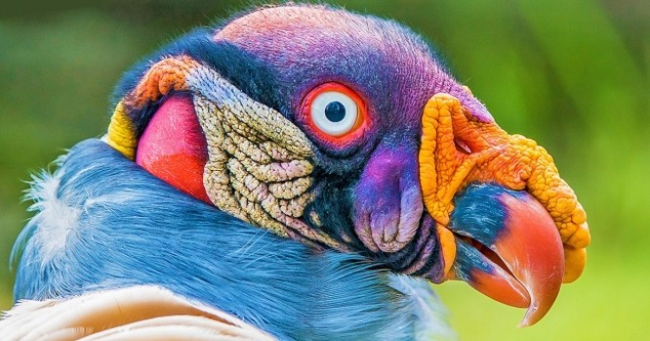 10 loài chim giống người ngoài hành tinh hơn động vật ảnh 1