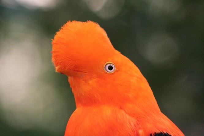 10 loài chim giống người ngoài hành tinh hơn động vật ảnh 2