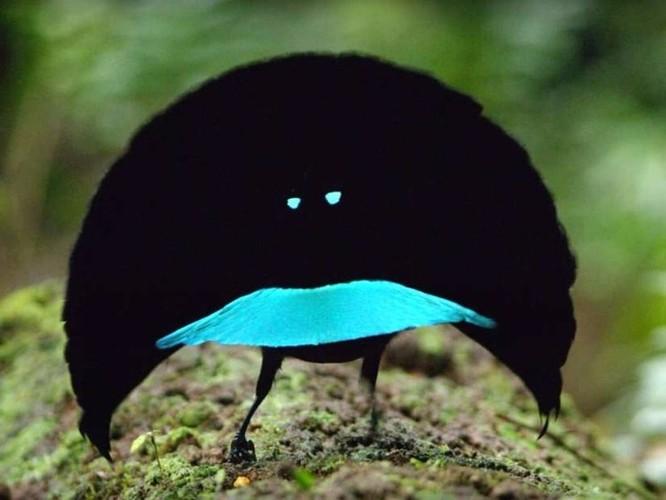 10 loài chim giống người ngoài hành tinh hơn động vật ảnh 3
