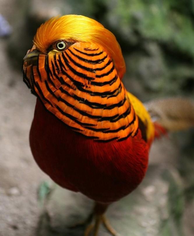 10 loài chim giống người ngoài hành tinh hơn động vật ảnh 4