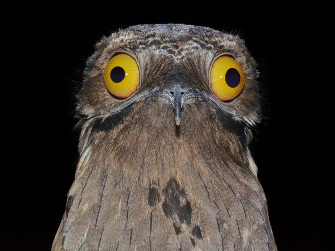 10 loài chim giống người ngoài hành tinh hơn động vật ảnh 7
