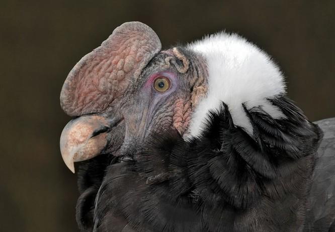 10 loài chim giống người ngoài hành tinh hơn động vật ảnh 9