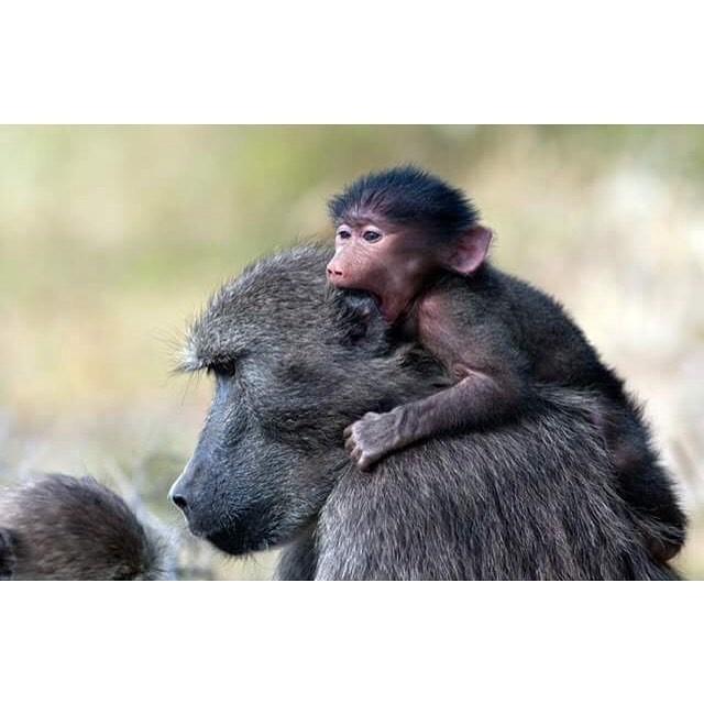 15 hình ảnh động vật chứng minh không có gì cao cả bằng tình yêu của người mẹ ảnh 12