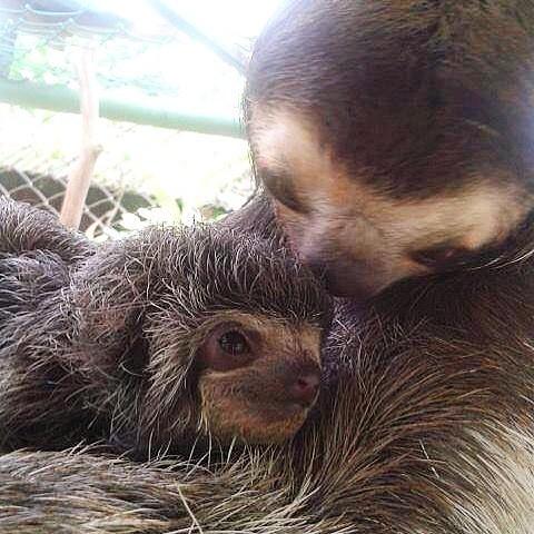 15 hình ảnh động vật chứng minh không có gì cao cả bằng tình yêu của người mẹ ảnh 15