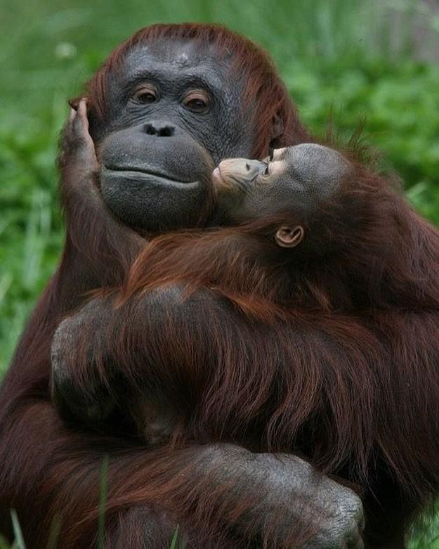 15 hình ảnh động vật chứng minh không có gì cao cả bằng tình yêu của người mẹ ảnh 3