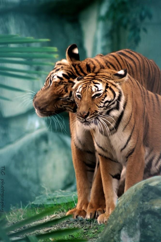 15 hình ảnh động vật chứng minh không có gì cao cả bằng tình yêu của người mẹ ảnh 4