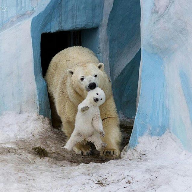 15 hình ảnh động vật chứng minh không có gì cao cả bằng tình yêu của người mẹ ảnh 5