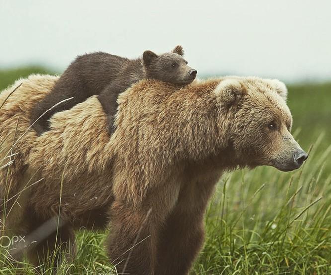 15 hình ảnh động vật chứng minh không có gì cao cả bằng tình yêu của người mẹ ảnh 6