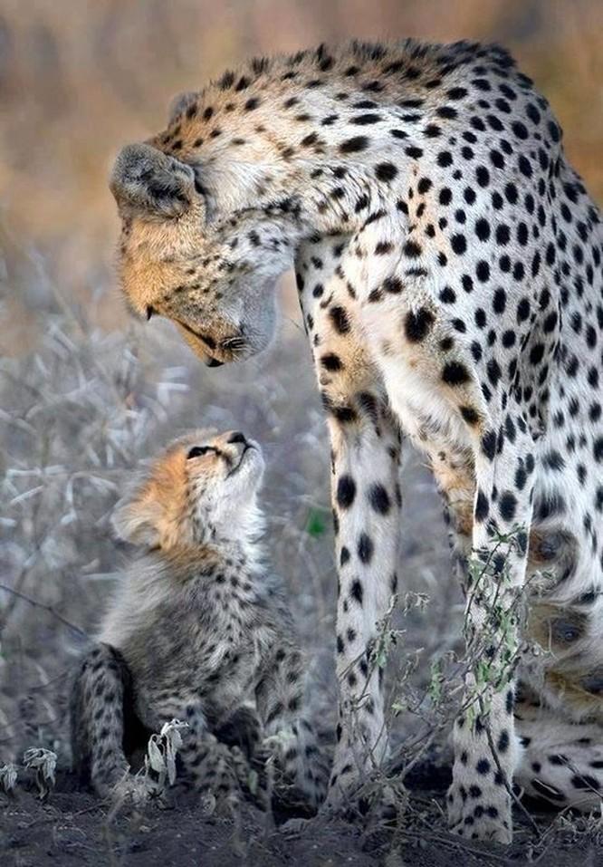 15 hình ảnh động vật chứng minh không có gì cao cả bằng tình yêu của người mẹ ảnh 8