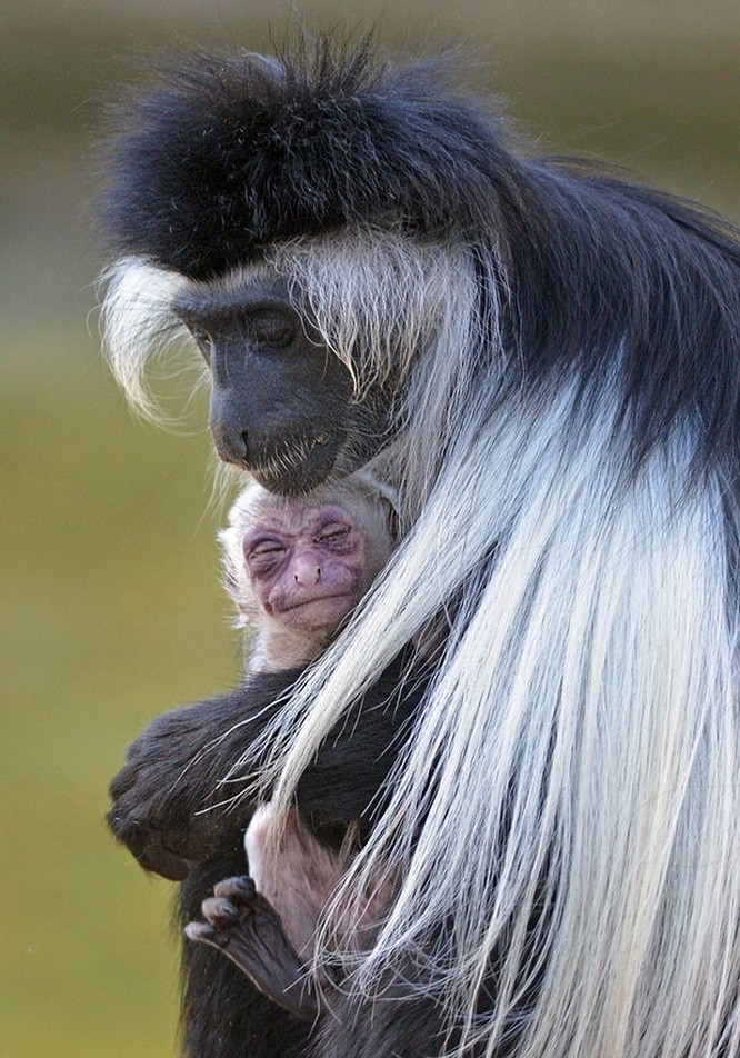 15 hình ảnh động vật chứng minh không có gì cao cả bằng tình yêu của người mẹ ảnh 9