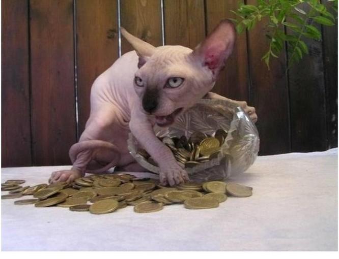 """20 hình ảnh chứng minh mèo Sphynx không chỉ """"mát mẻ"""" mà còn cực kỳ ngầu ảnh 1"""