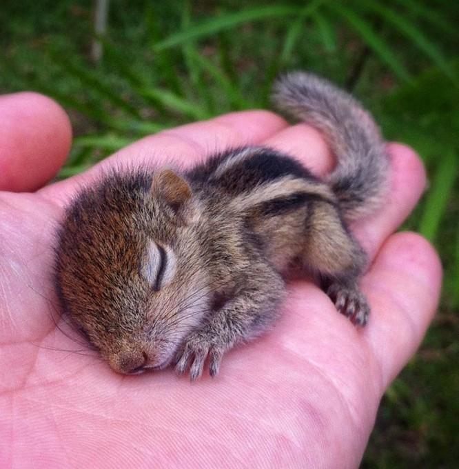 16 hình ảnh động vật nhỏ xinh giúp thổi bay một ngày âm u của bạn ảnh 15