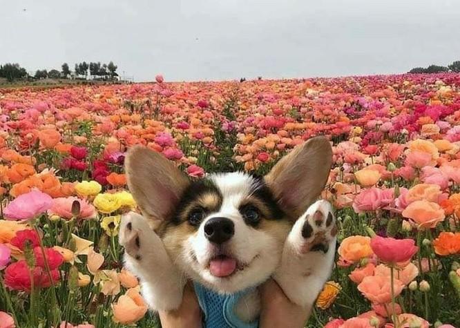 16 hình ảnh khiến bạn mỉm cười suốt những ngày cuối thu ảnh 10