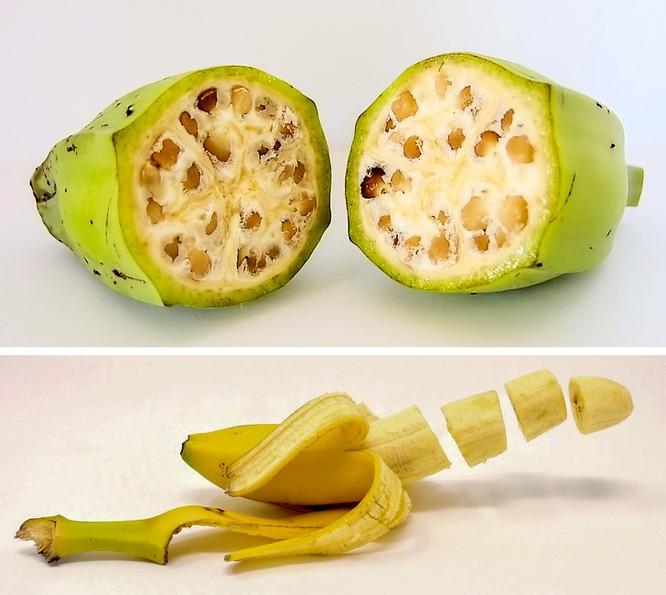 Trái cây xưa và nay khác nhau thế nào? ảnh 2