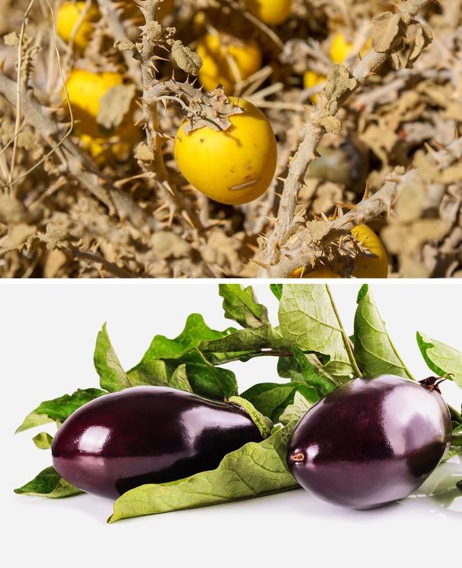 Trái cây xưa và nay khác nhau thế nào? ảnh 3