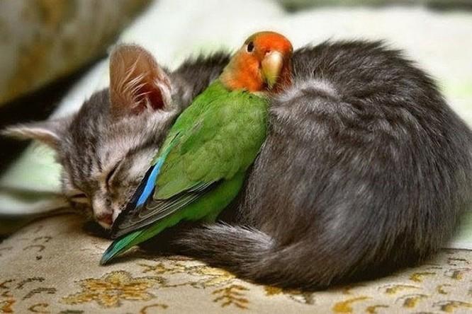 15 hình ảnh chứng minh động vật không thể sống mà không có tình yêu ảnh 2