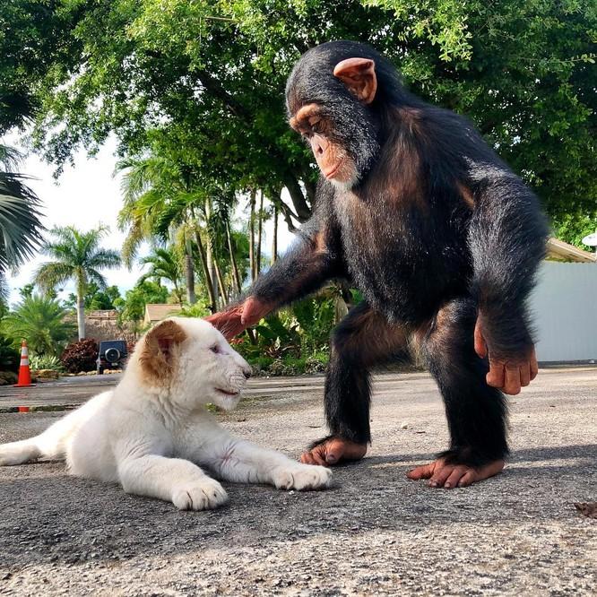 15 hình ảnh chứng minh động vật không thể sống mà không có tình yêu ảnh 3