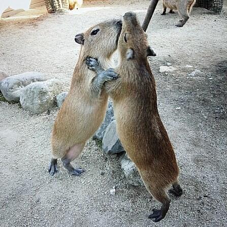 15 hình ảnh chứng minh động vật không thể sống mà không có tình yêu ảnh 7