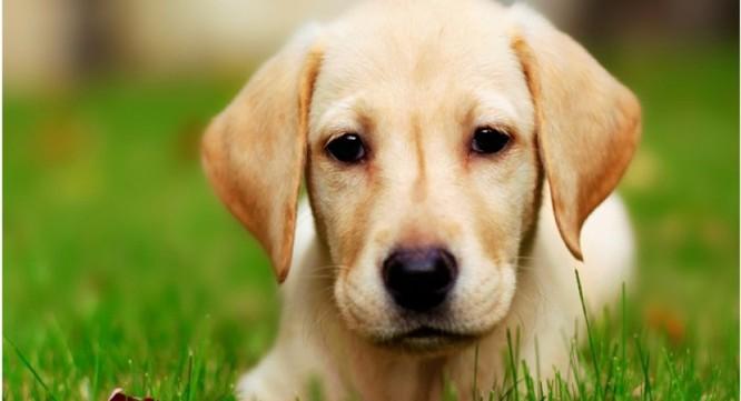 Bất ngờ với 7 điều kỳ lạ mà một chú chó có thể ngửi ảnh 1