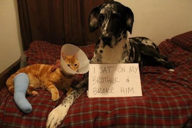15 hình ảnh thú tội ngộ nghĩnh của động vật ảnh 7