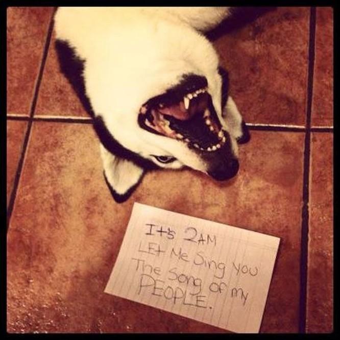 15 hình ảnh thú tội ngộ nghĩnh của động vật ảnh 1