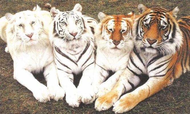 Sững sờ với màu sắc độc đáo của thế giới động vật ảnh 1