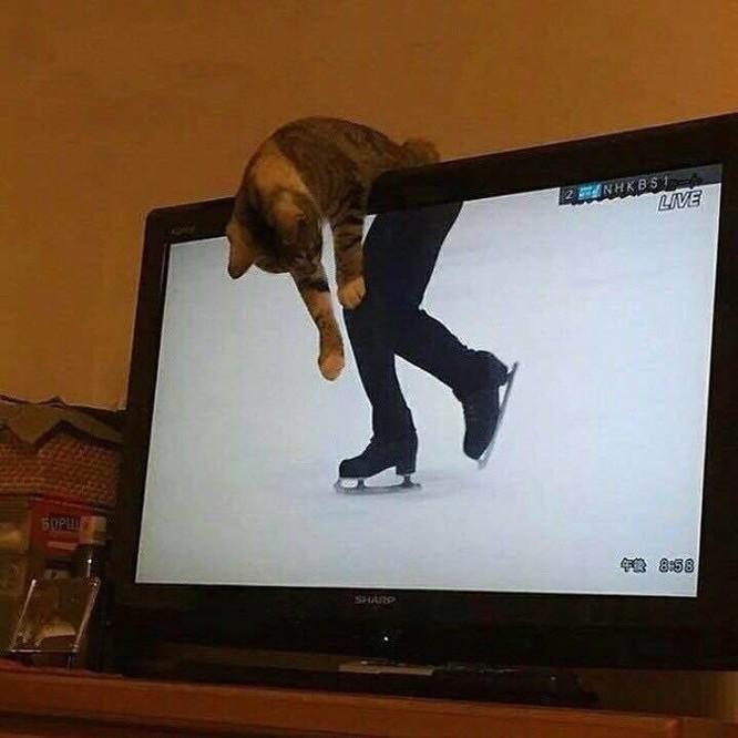 15 hình ảnh chứng minh loài mèo sở hữu tư duy logic kỳ lạ ảnh 8
