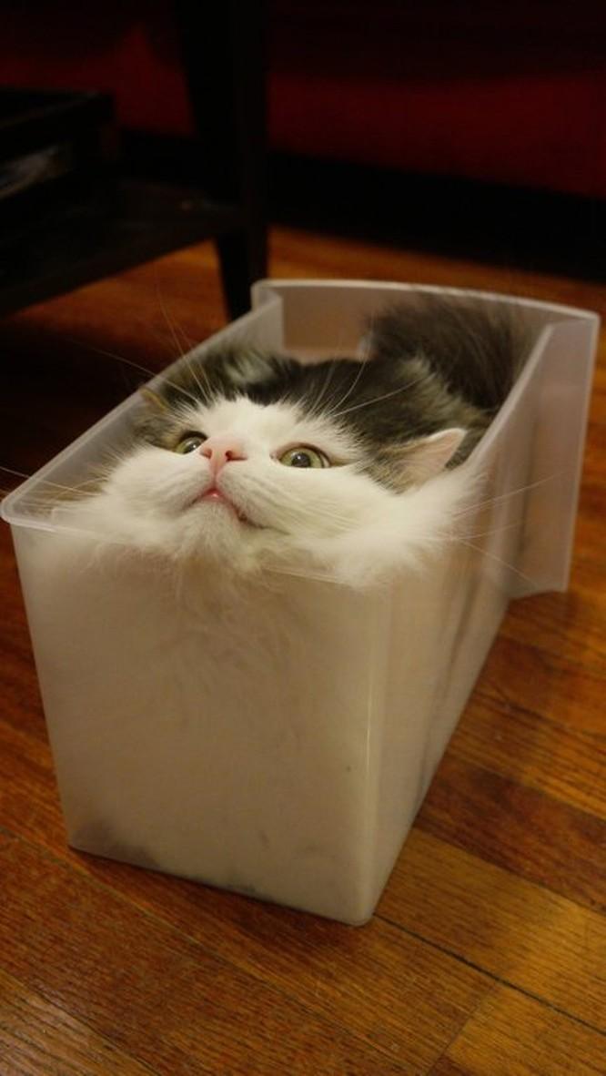 15 hình ảnh chứng minh loài mèo sở hữu tư duy logic kỳ lạ ảnh 9