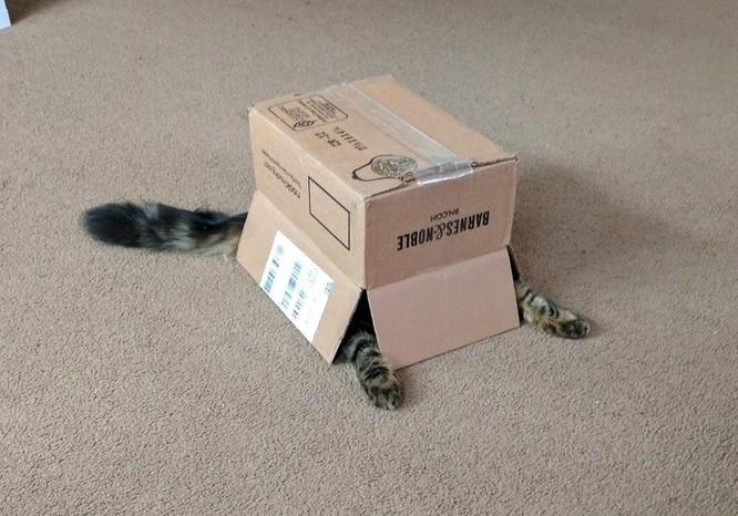 15 hình ảnh chứng minh loài mèo sở hữu tư duy logic kỳ lạ ảnh 12