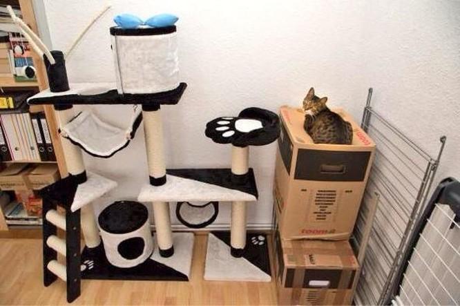 15 hình ảnh chứng minh loài mèo sở hữu tư duy logic kỳ lạ ảnh 7