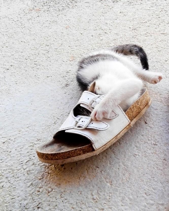 15 hình ảnh chứng minh loài mèo sở hữu tư duy logic kỳ lạ ảnh 5