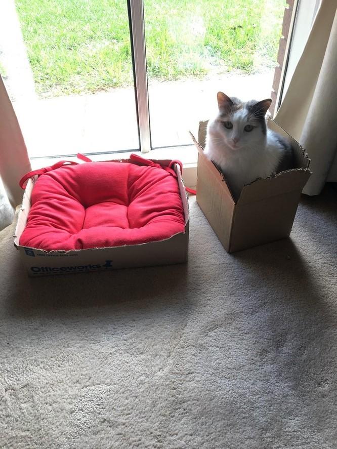 15 hình ảnh chứng minh loài mèo sở hữu tư duy logic kỳ lạ ảnh 2