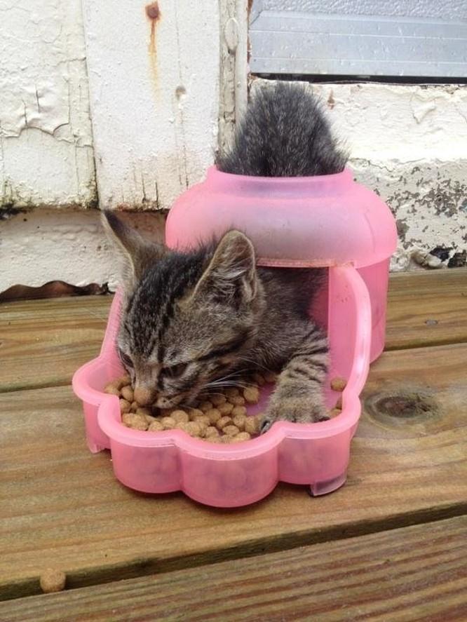 15 hình ảnh chứng minh loài mèo sở hữu tư duy logic kỳ lạ ảnh 1