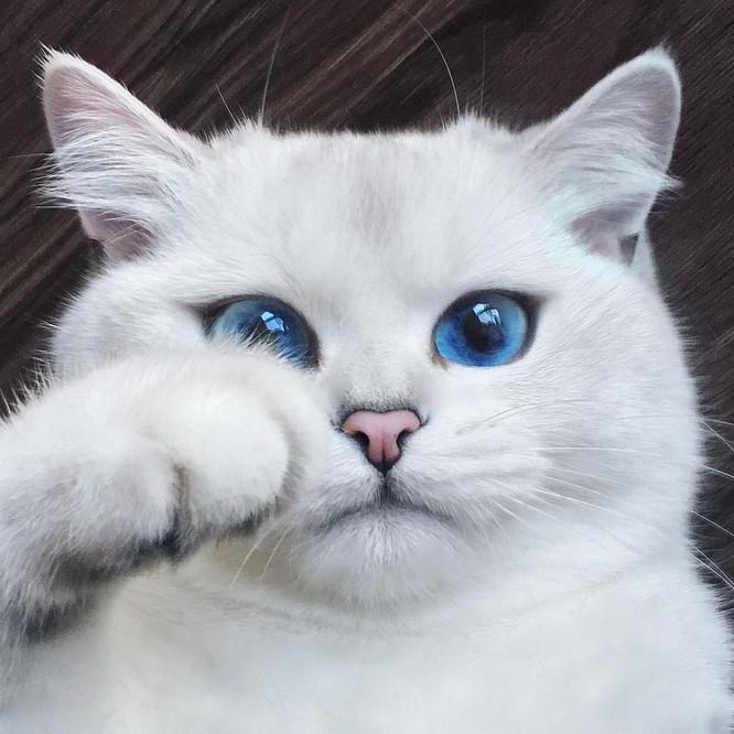 10 sinh vật sở hữu đôi mắt đẹp nhất hành tinh ảnh 2