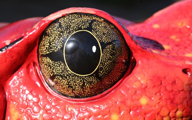 Kết quả hình ảnh cho 15 Creatures Whose Eyes Are So Beautiful, They're Hypnotizing