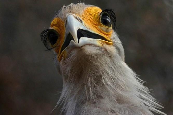 10 sinh vật sở hữu đôi mắt đẹp nhất hành tinh ảnh 3