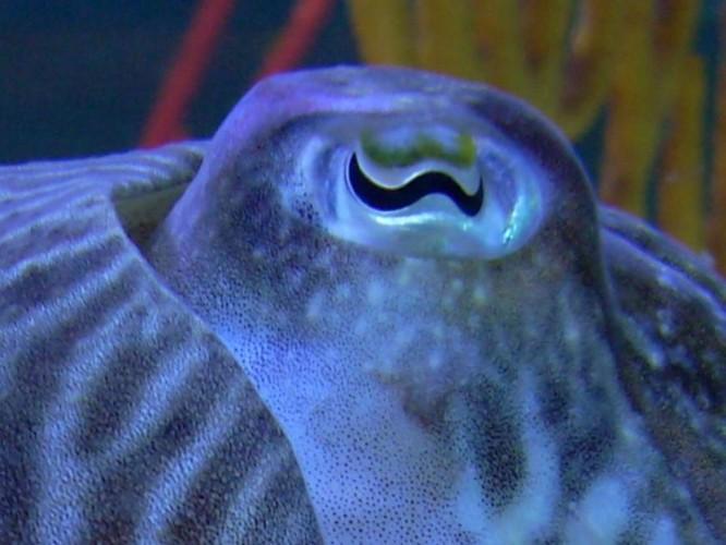 10 sinh vật sở hữu đôi mắt đẹp nhất hành tinh ảnh 5