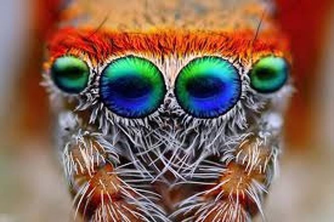10 sinh vật sở hữu đôi mắt đẹp nhất hành tinh ảnh 6