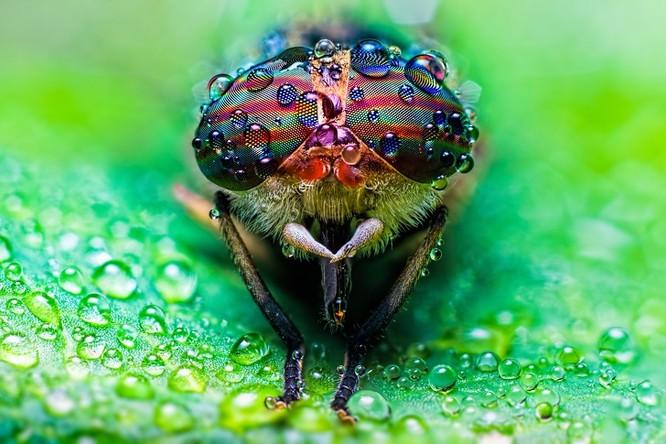 10 sinh vật sở hữu đôi mắt đẹp nhất hành tinh ảnh 1