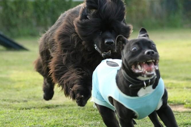 15 hình ảnh chứng minh cuộc sống sẽ không bao giờ buồn chán nếu có thú cưng ảnh 8