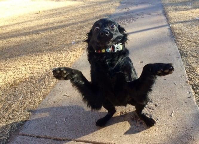 15 hình ảnh chứng minh cuộc sống sẽ không bao giờ buồn chán nếu có thú cưng ảnh 9