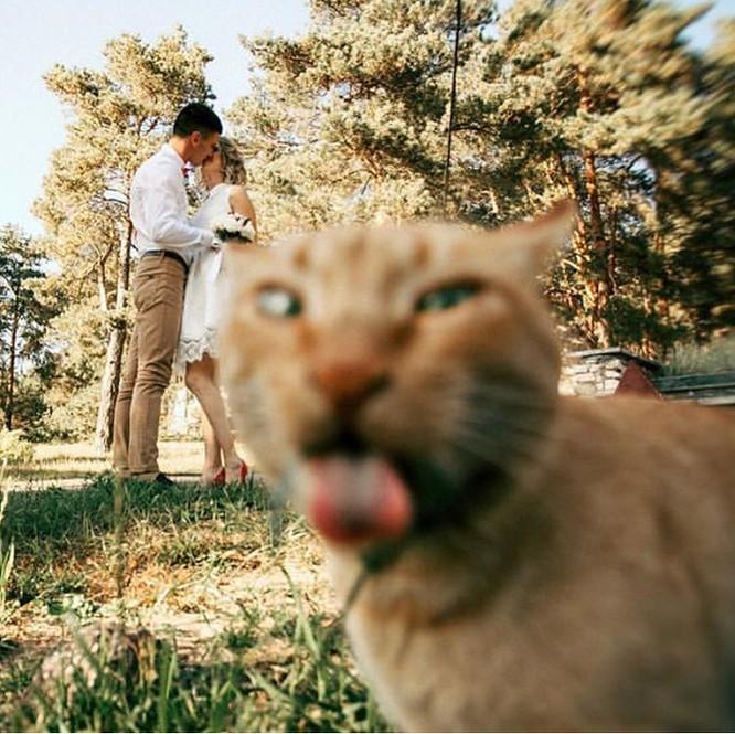 15 hình ảnh chứng minh cuộc sống sẽ không bao giờ buồn chán nếu có thú cưng ảnh 3