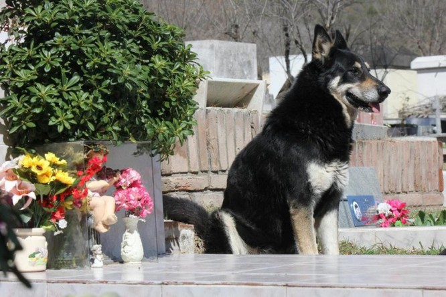 15 bức ảnh cảm động chứng minh chó là động vật trung thành nhất hành tinh ảnh 3