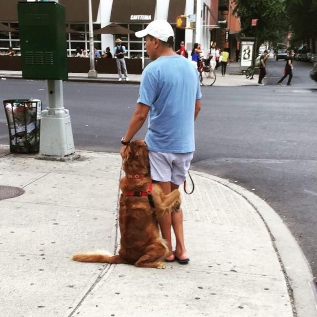 15 bức ảnh cảm động chứng minh chó là động vật trung thành nhất hành tinh ảnh 15