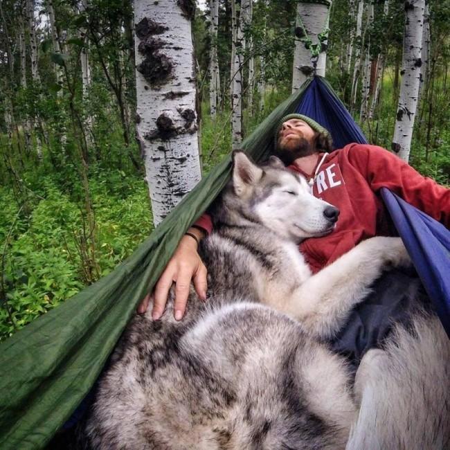 15 bức ảnh cảm động chứng minh chó là động vật trung thành nhất hành tinh ảnh 11