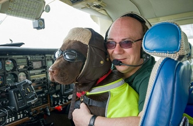 15 bức ảnh cảm động chứng minh chó là động vật trung thành nhất hành tinh ảnh 1